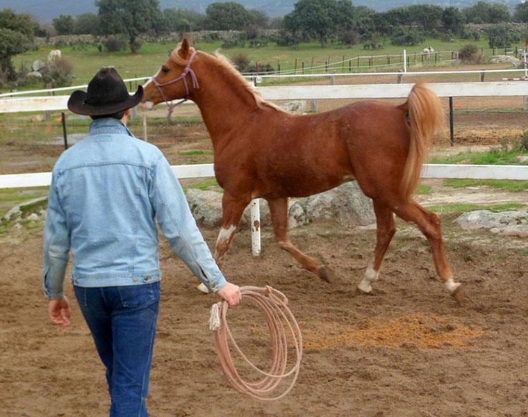 Enseñar a bailar Aprende Country Line Dance - Doma Nysa 01